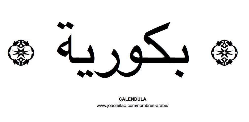 Calendula Nombre de Flor en Arabe