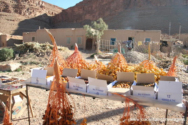 Tâmaras Marrocos