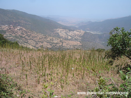 Plantações de Marijuana nas montanhas do Rif, Marrocos