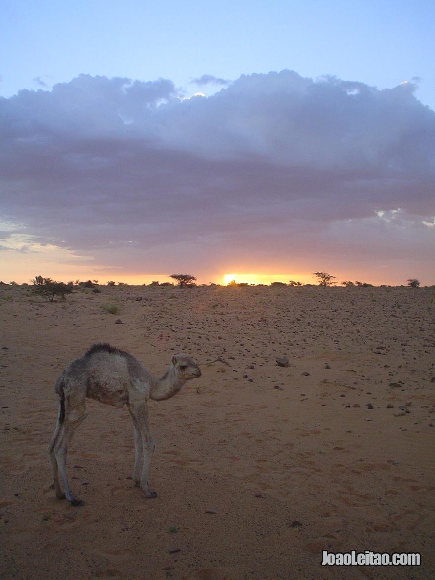 Viagem Carro Mauritania (16)