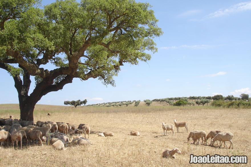 Bonita paisagem do Alentejo em Portugal