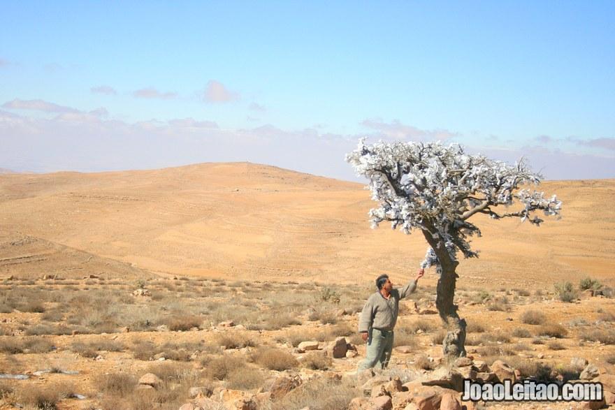 Foto de árvore com gelo na Estrada do Rei - Kings Way na Jordânia