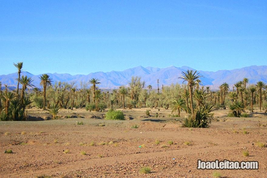 Palmeiral Skoura na região de Ouarzazate
