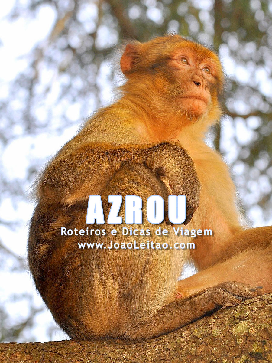 Macacos nas Florestas de Azrou