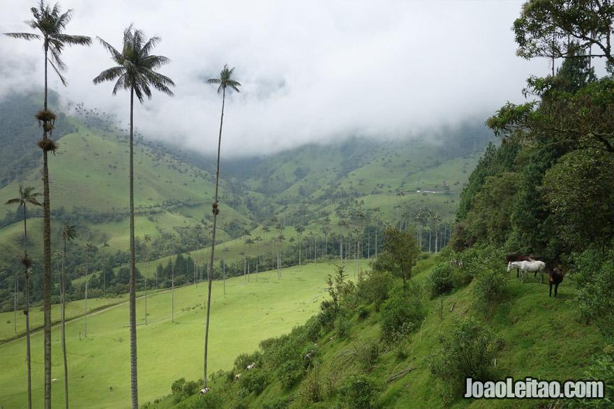 Vale de Cocora, Visitar a Colombia