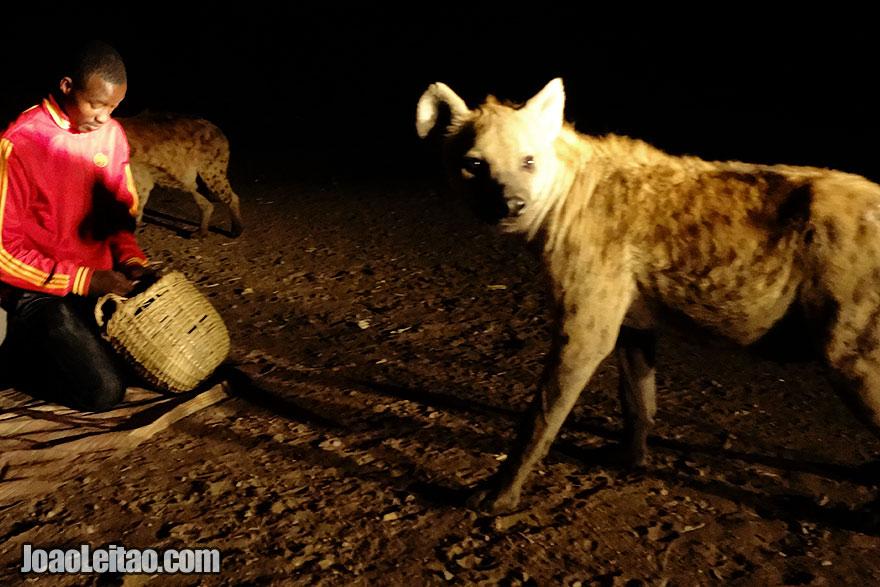 Ritual de alimentar as hienas na Etiópia