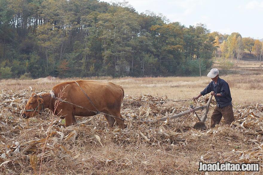 As pessoas a trabalharem no campo