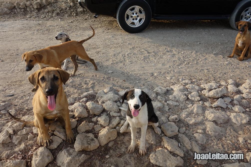 Cachorros bareinitas