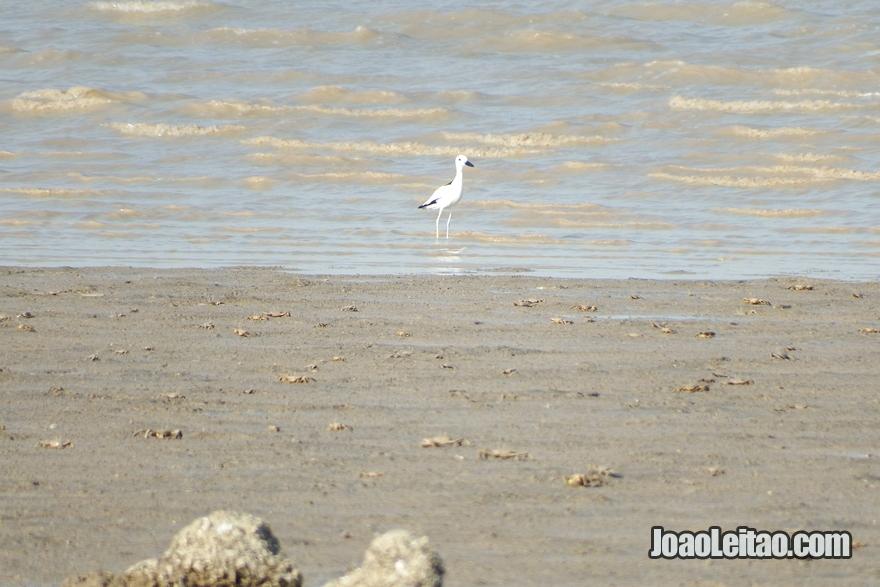 Foz do rio Eufrates no Kuwait