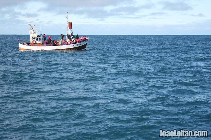 Observar baleias em Husavik na Islandia