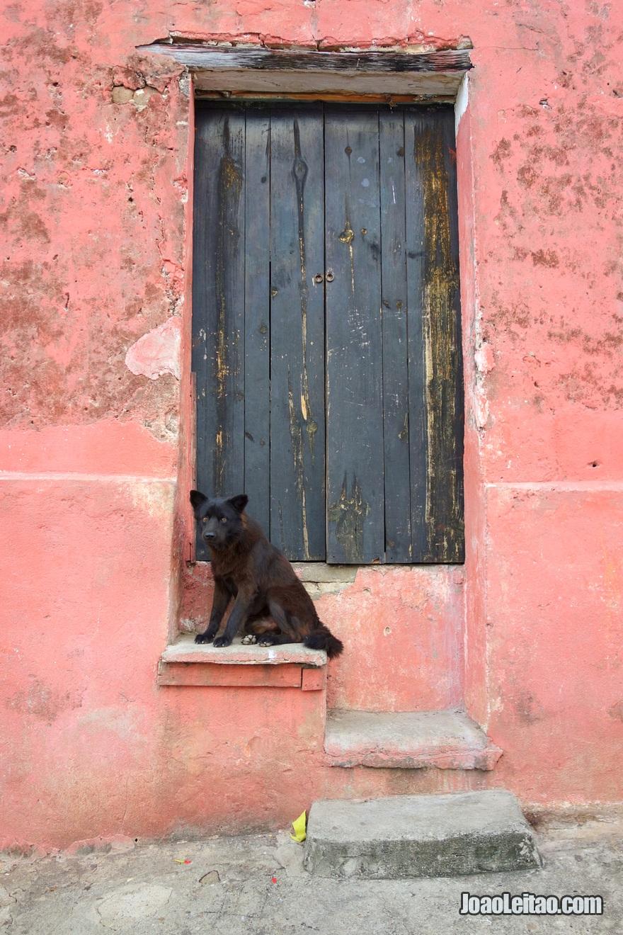 Cão junto a porta em Suchitoto