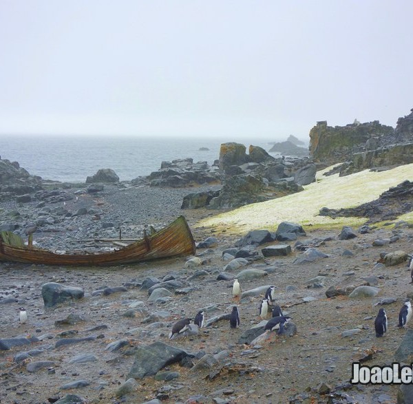Ilha Meia Lua – A Antártida Gélida e Abandonada