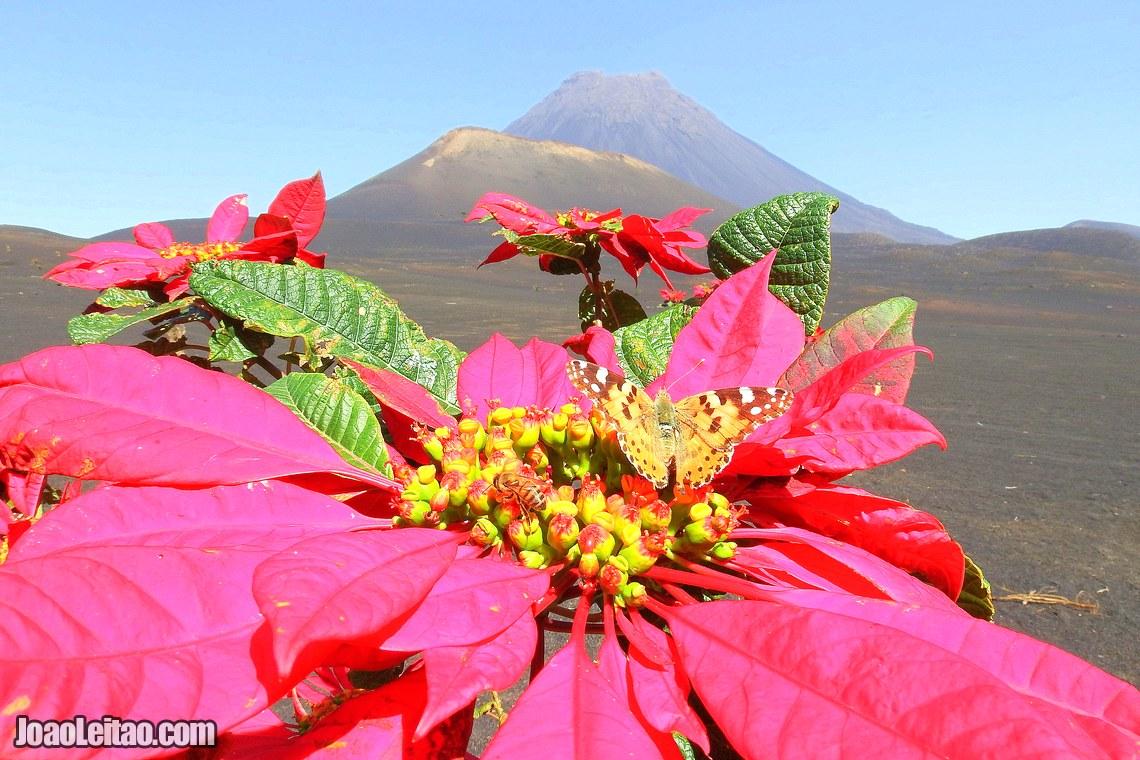 Vulcão da Ilha do Fogo, Visitar Cabo Verde