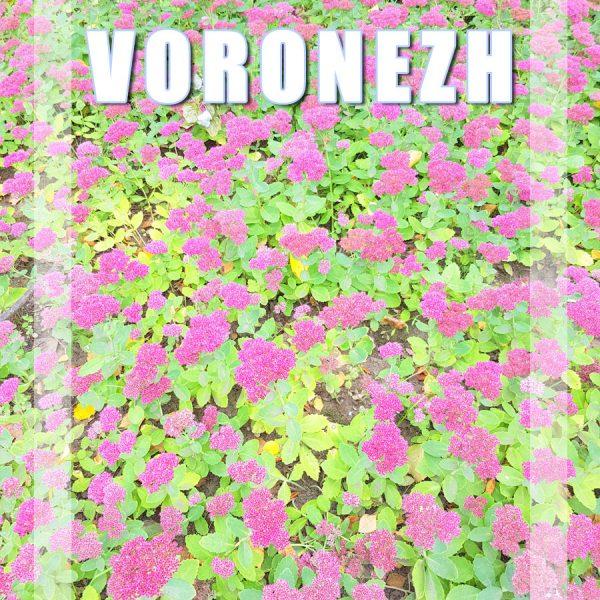 Visitar Voronezh, Rússia: Guia Prático de Viagem