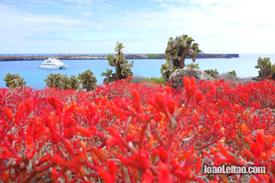 Galapagos Last Minute Cruises - photo of South Plaza Island