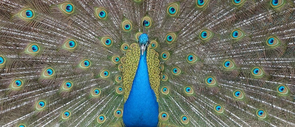 Best Wildlife Images, Animal Photos