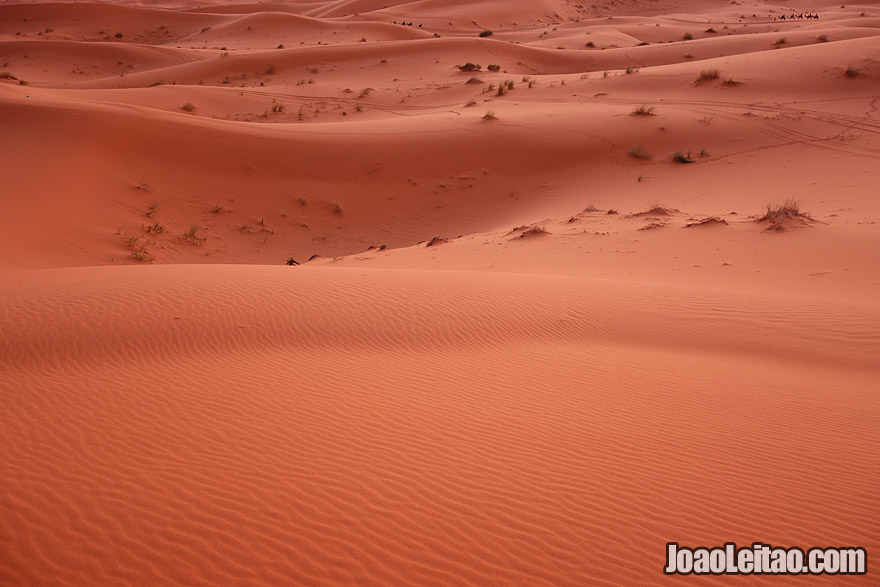 Nomad Revelations   Travel Blog and Adventures - photo of camel caravan in Sahara Desert