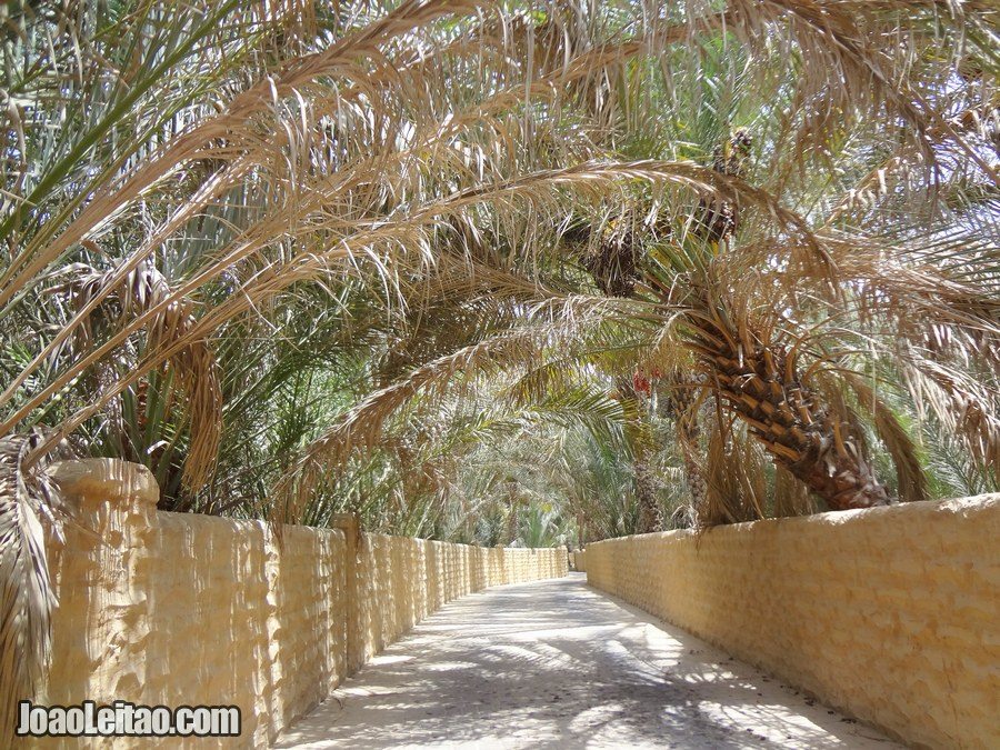 Visit Al Ain Oasis United Arab Emirates