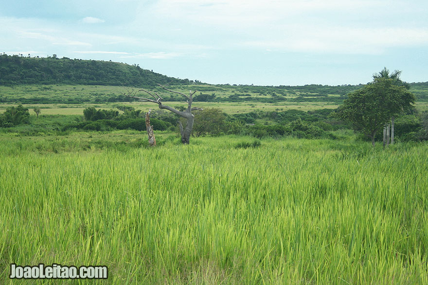 Green field on the way to Baracoa