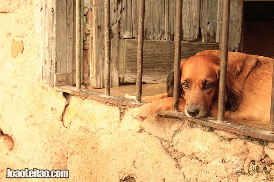 Cute Cuban puppy