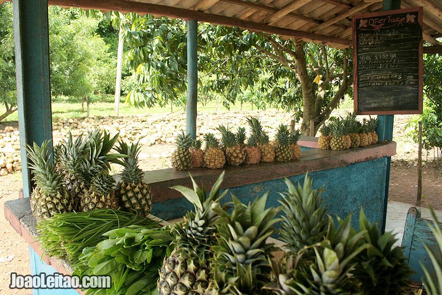 Pineapple Fruit stall