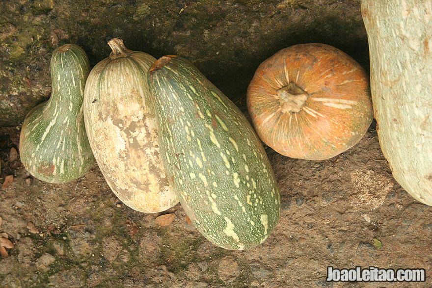 Cuban pumpkins
