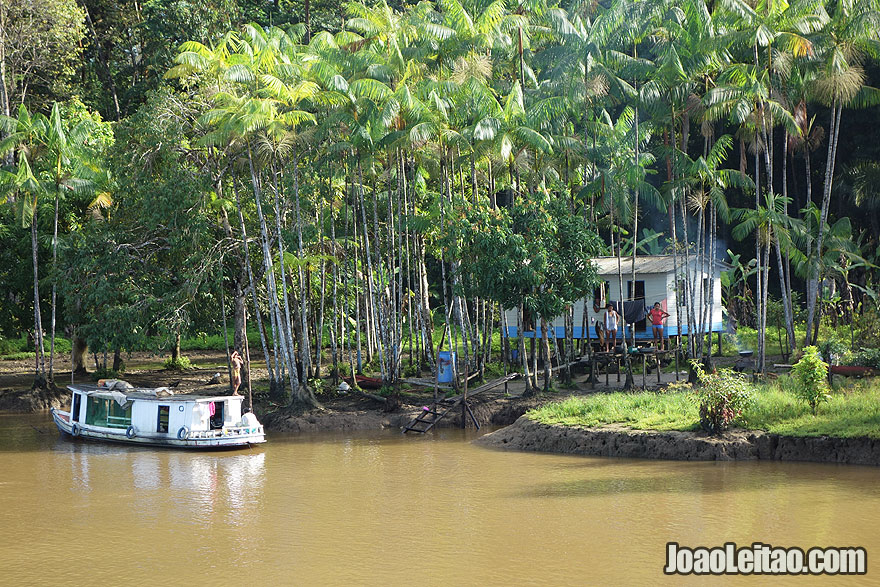 Casa na selva perto do Rio Amazonas, Brasil