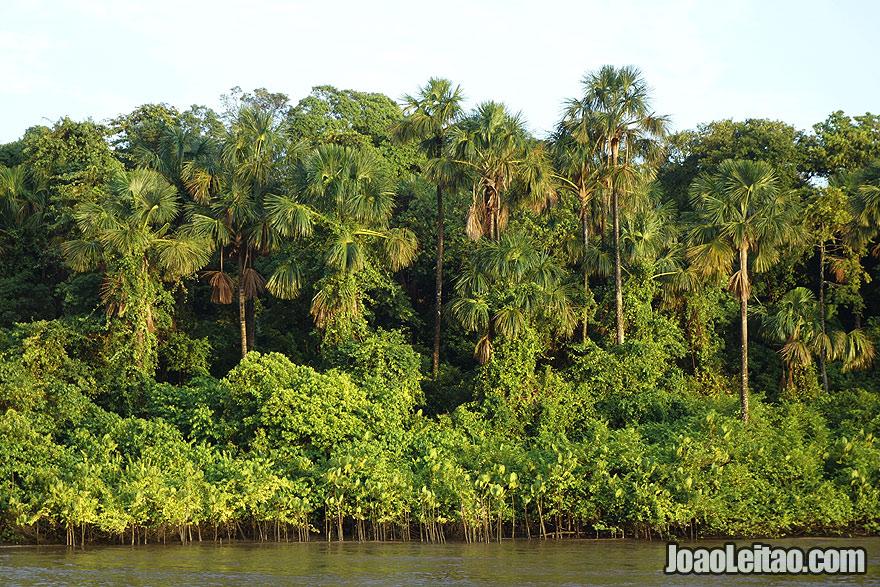 Selva Amazónica no Brasil