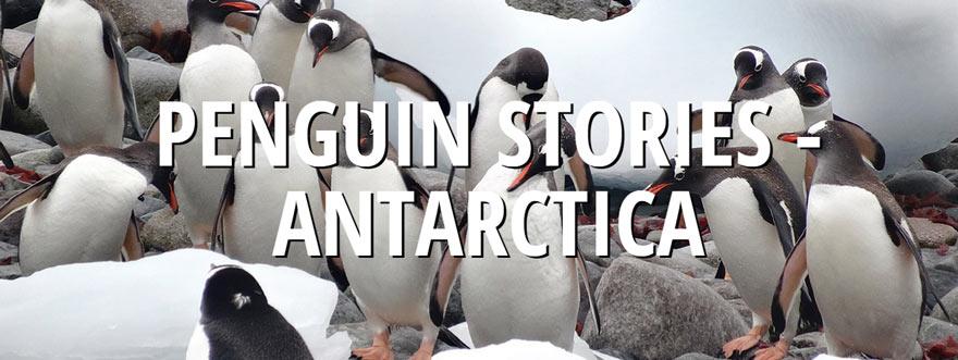 Travel Antarctica Blog