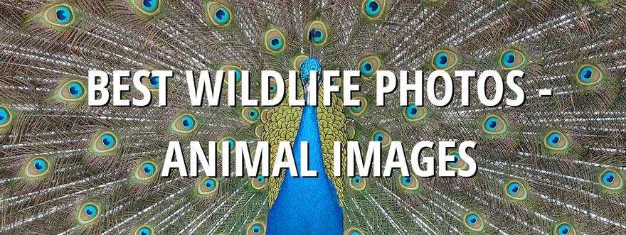 Travel Wildlife Photo Blog