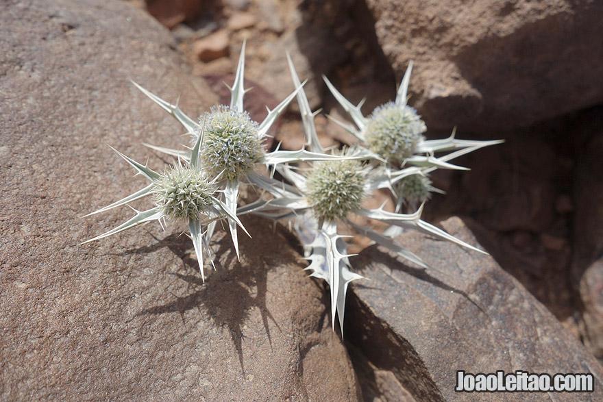 Desert fauna in Morocco