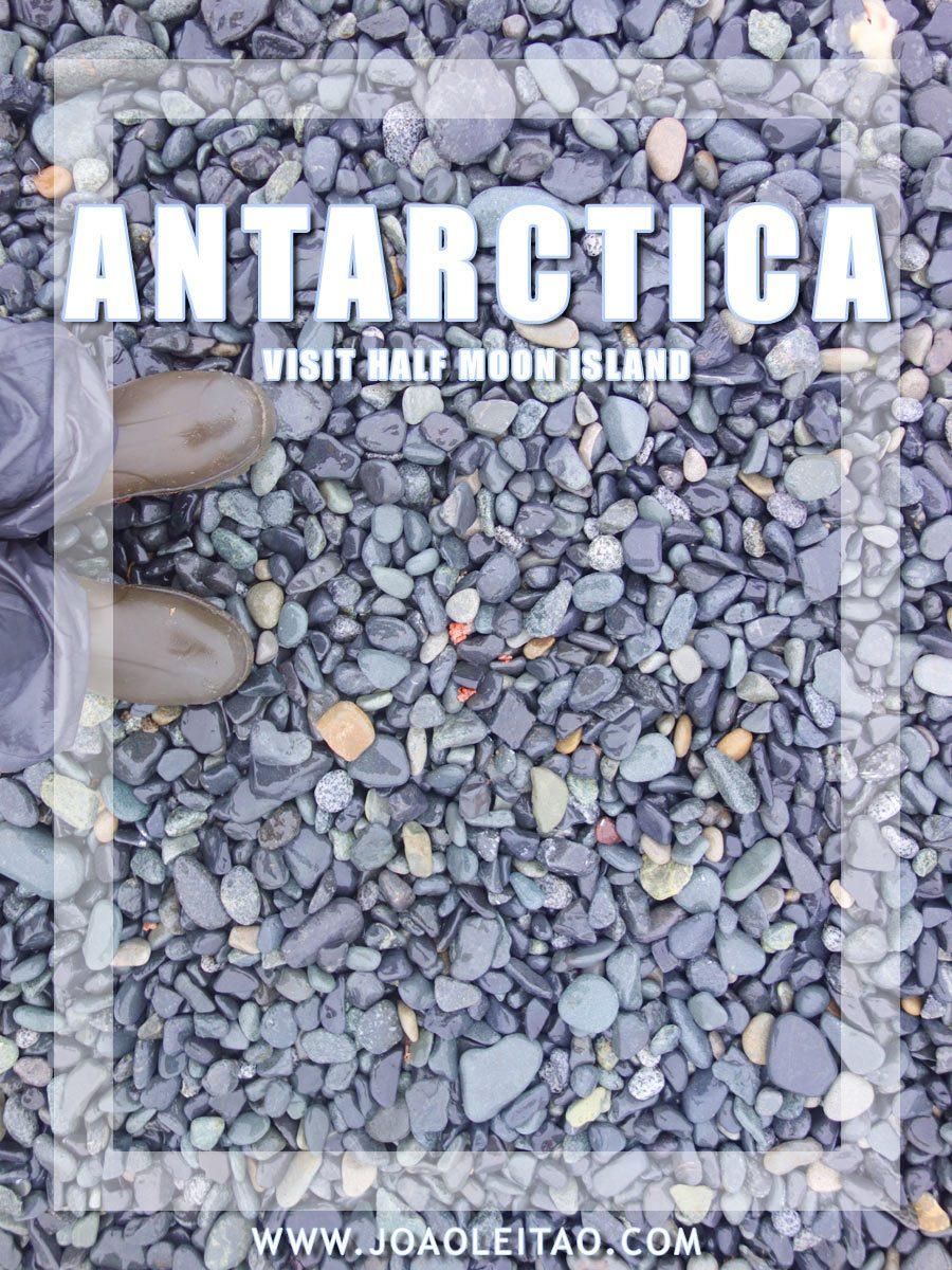 Visit Half Moon Island Forsaken Humid Antarctica