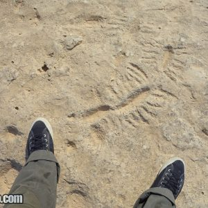 Al Jassasiya Rock Carvings in Qatar