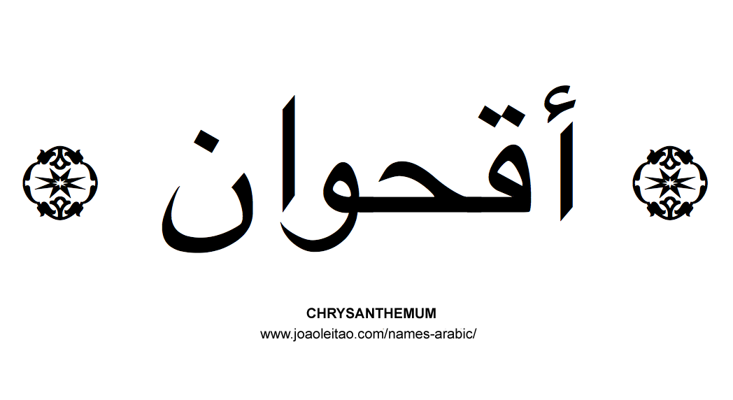 Flowers in Arabic: Arabic CHRYSANTHEMUM