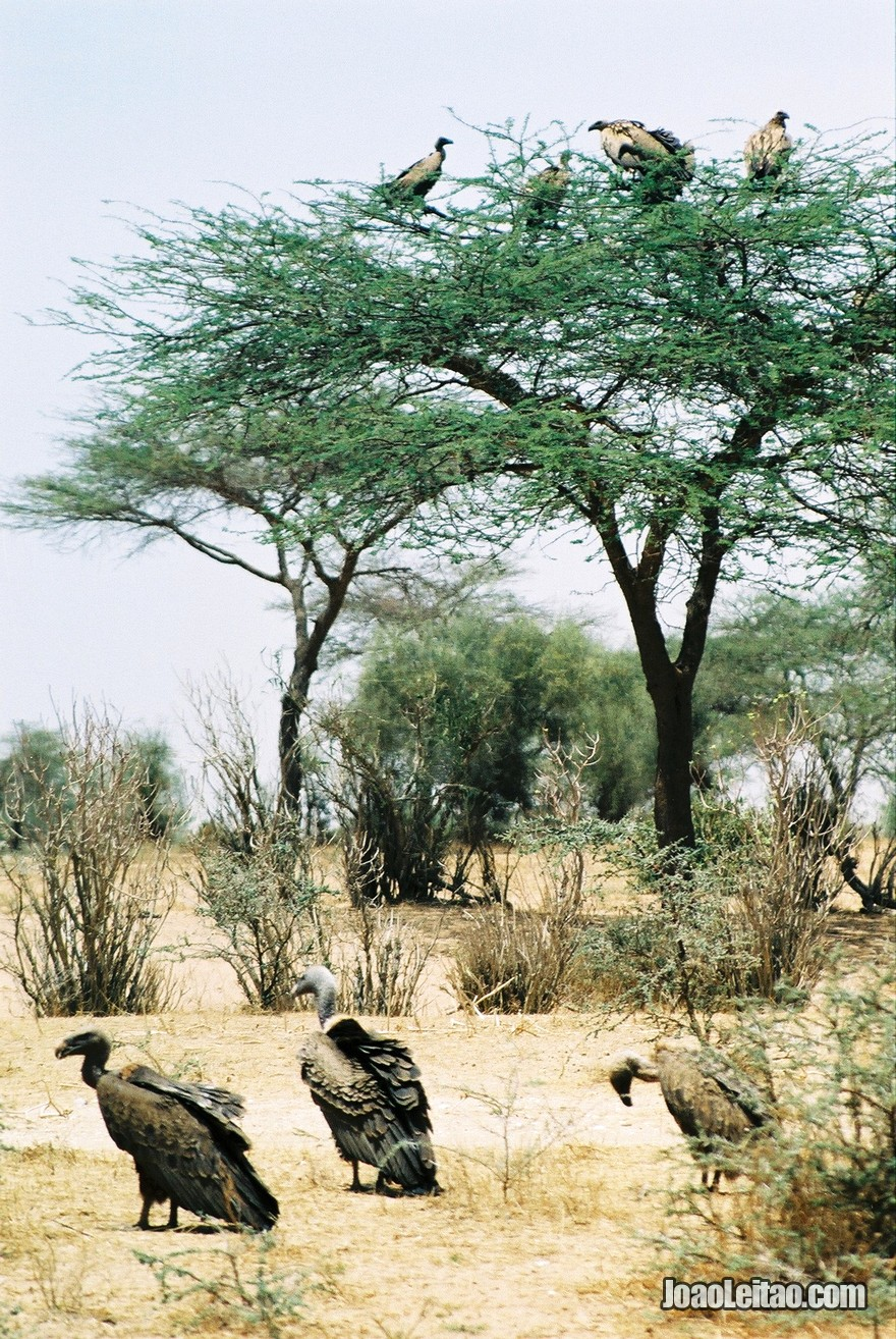 Viagem Carro Mauritania (52)