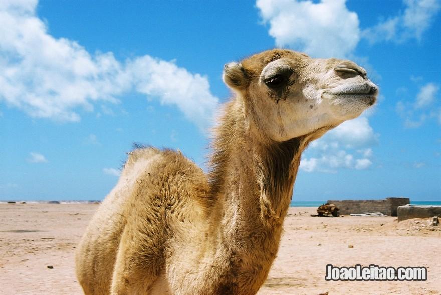 Viagem Carro Mauritania (61)