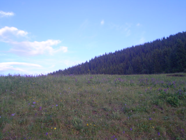 Parque Nacional de Ile-Alatau, Cazaquistão - Ásia Central 32