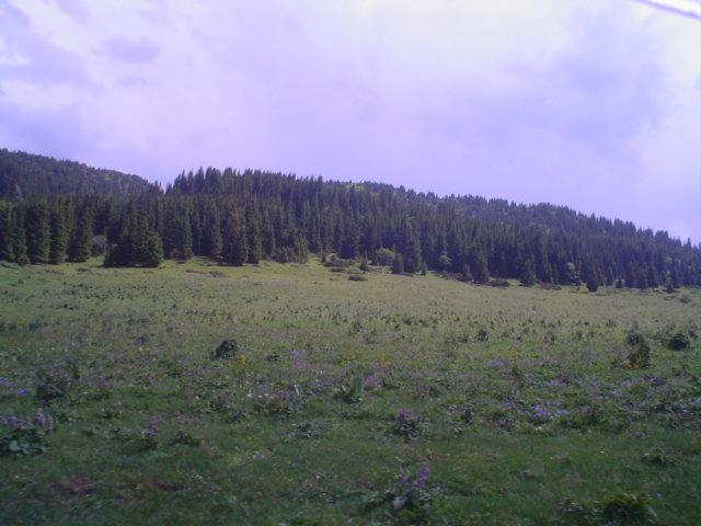 Parque Nacional de Ile-Alatau, Cazaquistão - Ásia Central 7