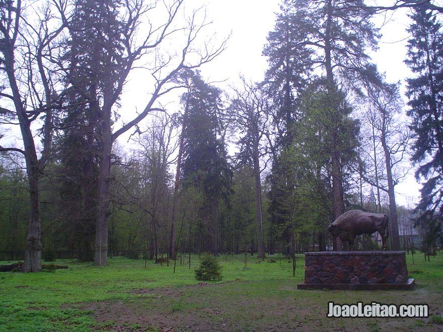Fotografia do Parque Nacional Bialowieza