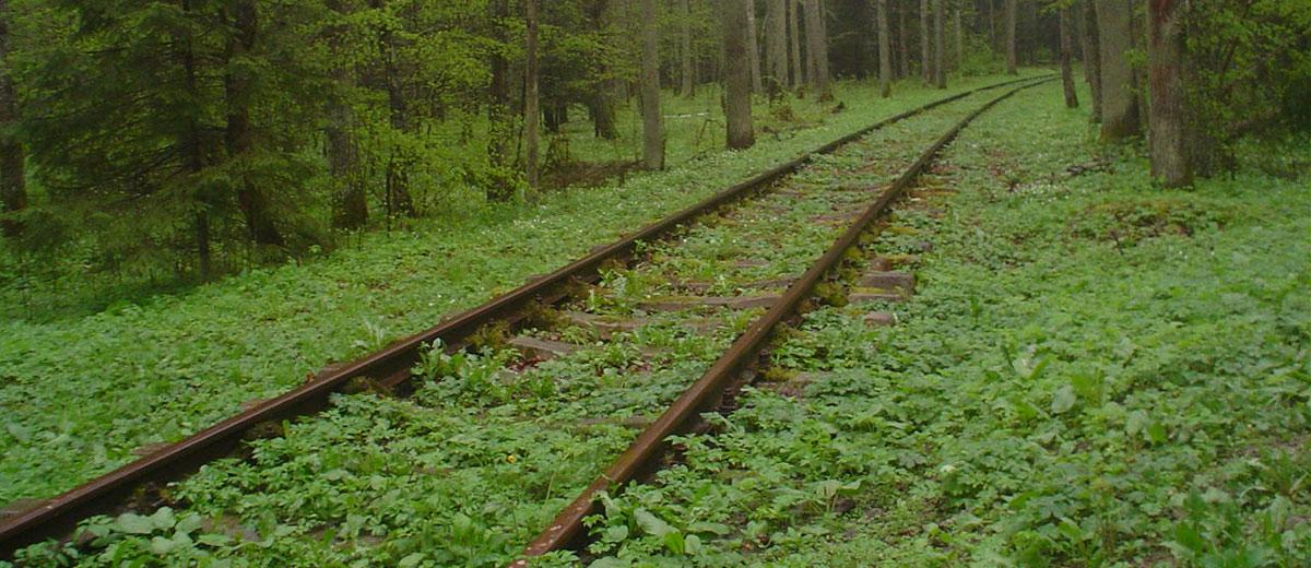 Fotografias do Parque Nacional Bialowieza