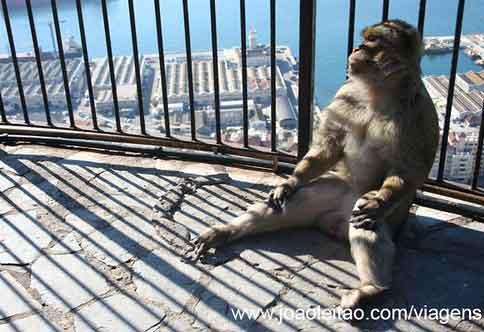 Macacos de Gibraltar, Upper Rock Nature Reserve