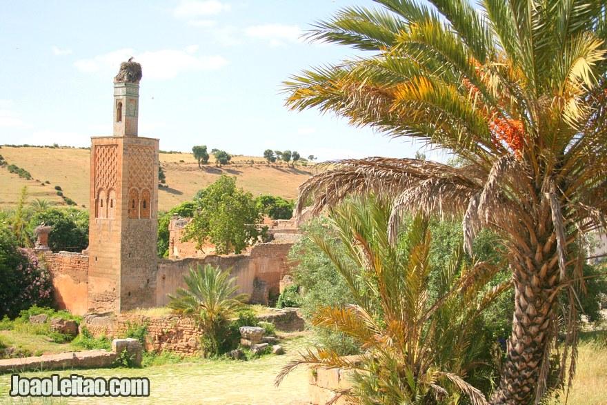 Foto da vista das ruínas de Chellah