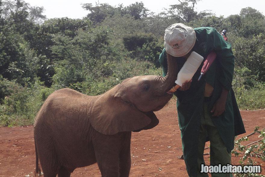 Orfanato de elefantes, Visitar Quenia