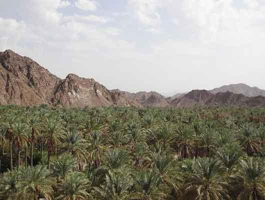 Palmeiral de Samail, Omã