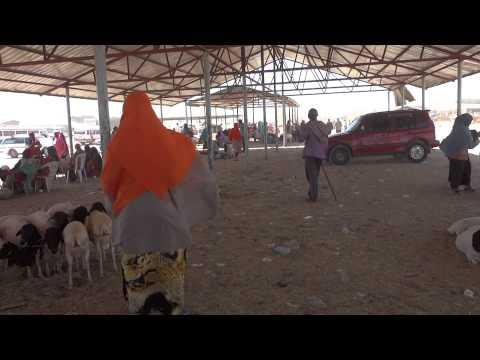 Vídeos do mercado de animais em Hargeisa, Somalilândia 1