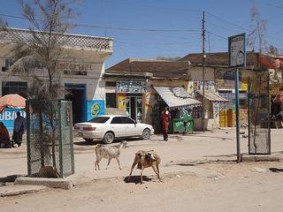 Vídeos do mercado de animais em Hargeisa, Somalilândia 12