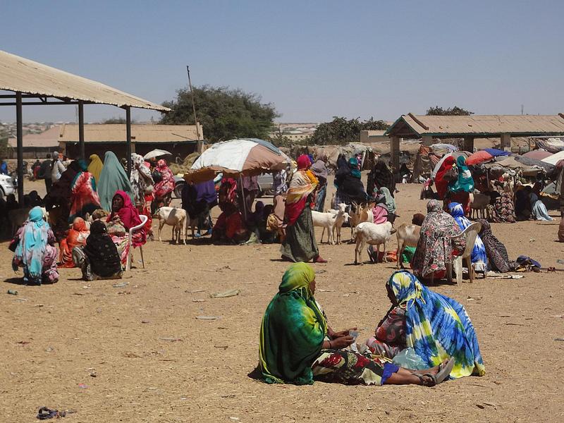 Fotografias mercado de animais, Hargeisa Somalilândia 2