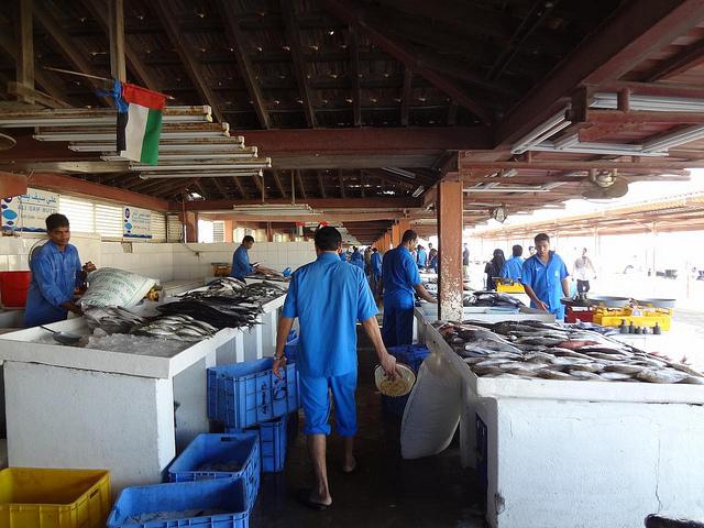 Mercado do Peixe de Sharjah Emirados Árabes Unidos 56