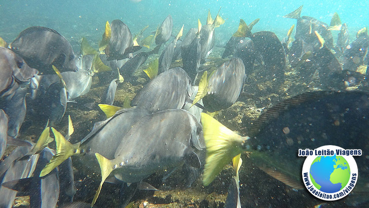 Snorkeling Ilha Bartolome Galapagos