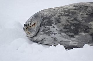 Viajar na Antártida - Um fascínio inegável 3